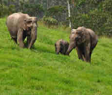 Kerala wildlife Tour Packages with Price
