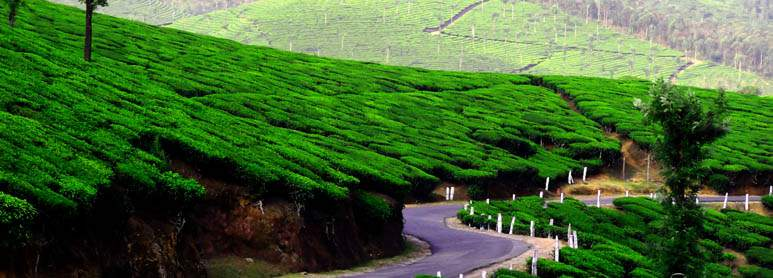 Munnar Kerala honeymoon places