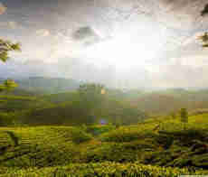 Munnar- Kerala Tour Packages with Price