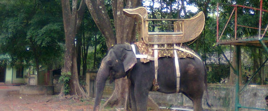 Kodanad Elephant Sanctuary & Training Center in Kerala