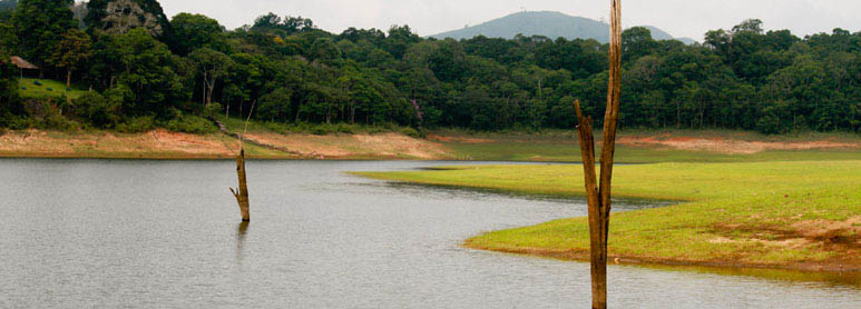 Thekkady Tour Packages | Kerala Wildlife Tourism packages by Thekkady tour operators