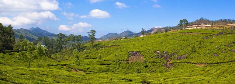 Munnar Tour Package