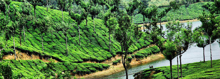 Munnar to Thekkady Holiday Packages