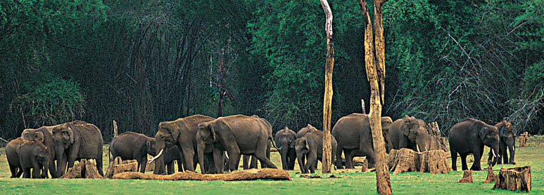 Athirapally Tour Package