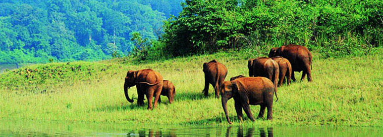 Thekkady Luxury Tours Pockage