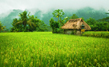 Enjoy the beautiful villages & Paddy Fields